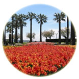The Croisette gardens in Cannes